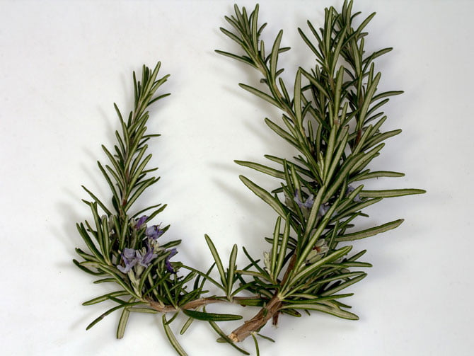 best rosemary substitutes