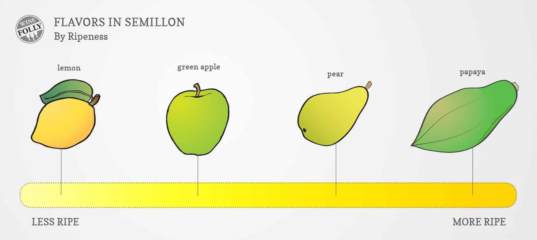 semillon flavor profile