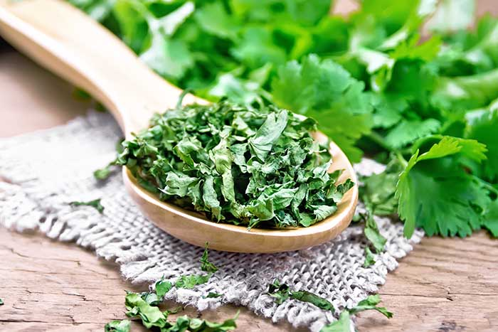 Dried cilantro in a spoon on burlap, fresh cilantro herb on a wooden board background