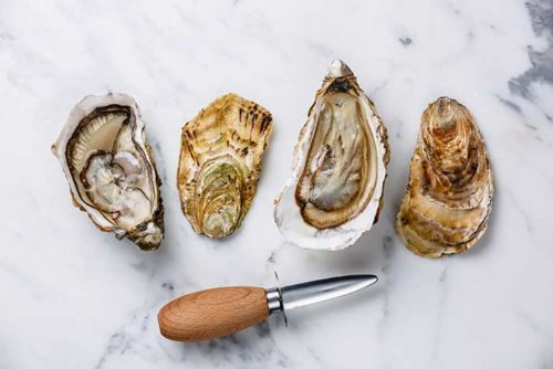 best oyster shucking knife guide
