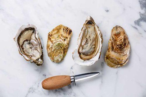 best oyster shucking knife guide